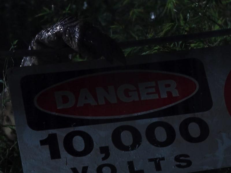 Jurassic Park T Rex Fence